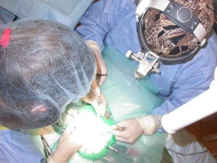 quirofano cirugia y anestesia animales exoticos cv los sauces