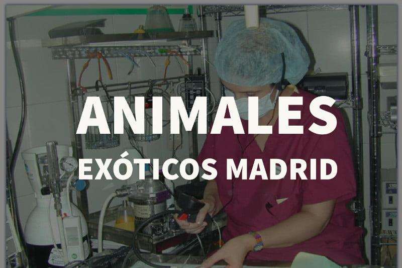 animales exoticos madrid