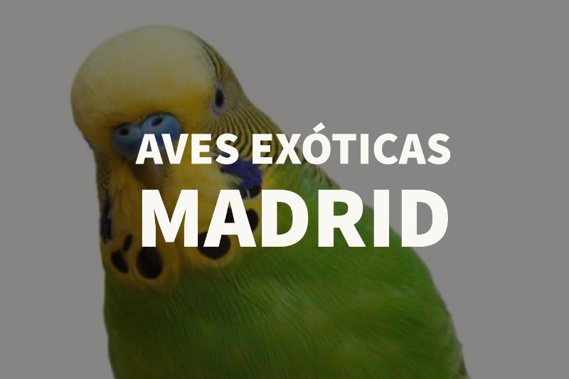 aves exoticas madrid