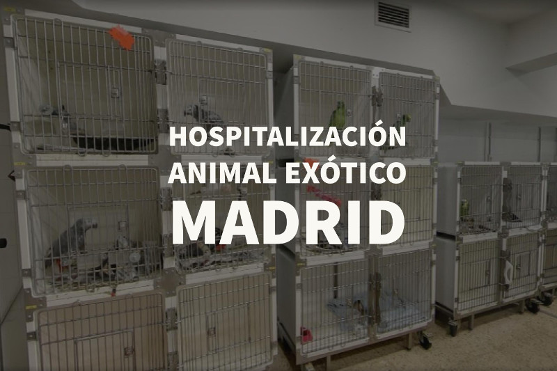 hospitalizacion animal exotico madrid
