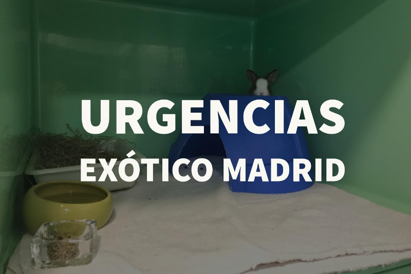 urgencias exotico madrid