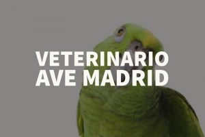 veterinario ave madrid