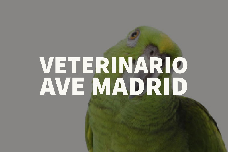veterinario ave madrid