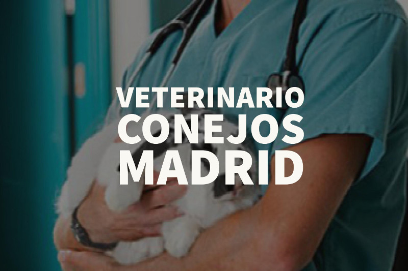 veterinario conejos madrid