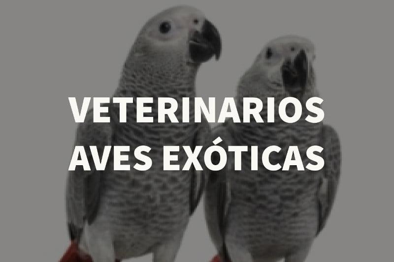 veterinarios aves exoticas