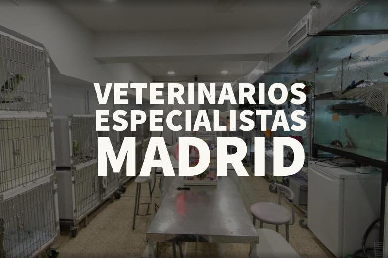 veterinarios especialistas madrid